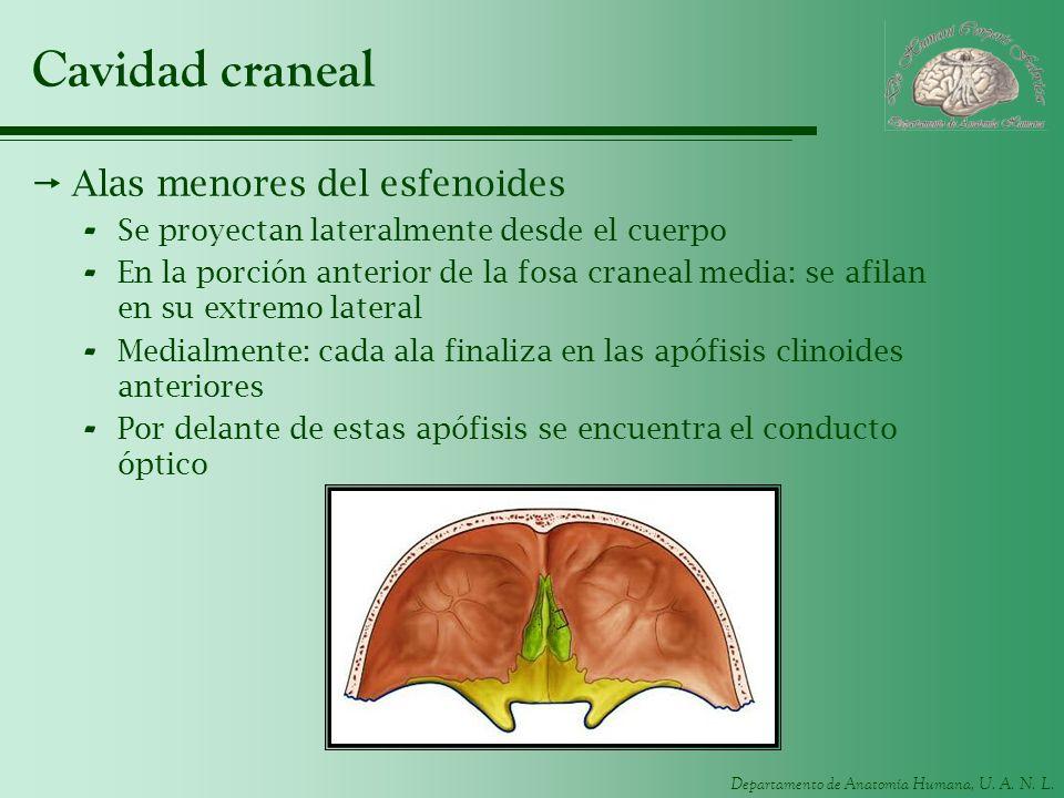 Cavidad craneal Alas menores del esfenoides