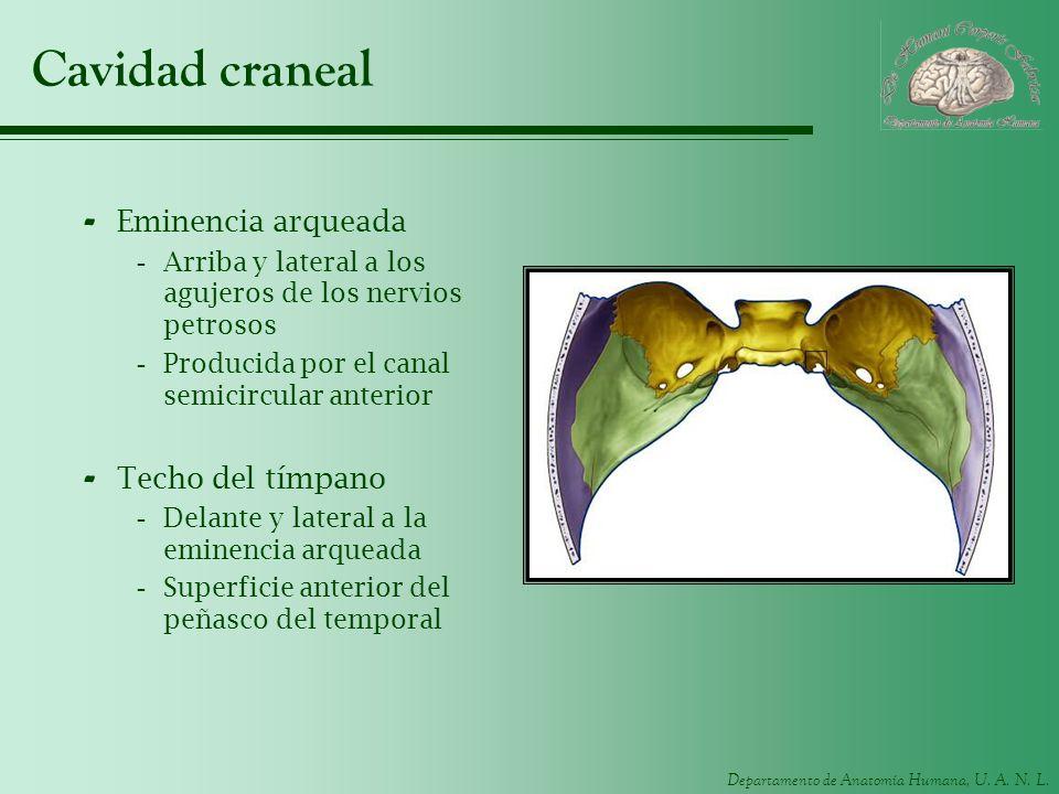 Cavidad craneal Eminencia arqueada Techo del tímpano