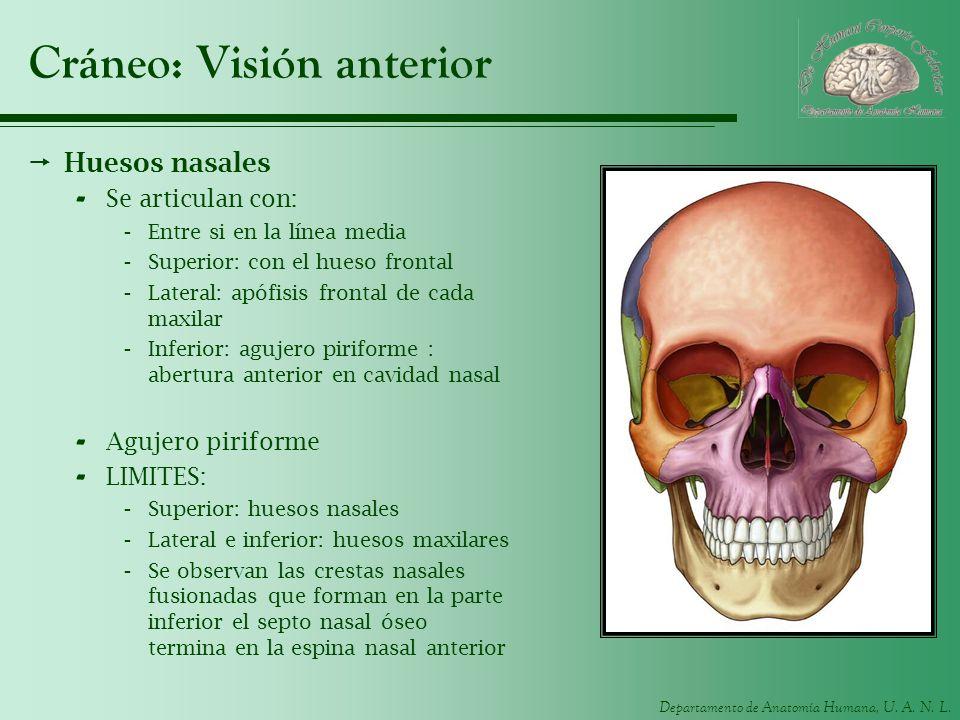 Cráneo: Visión anterior