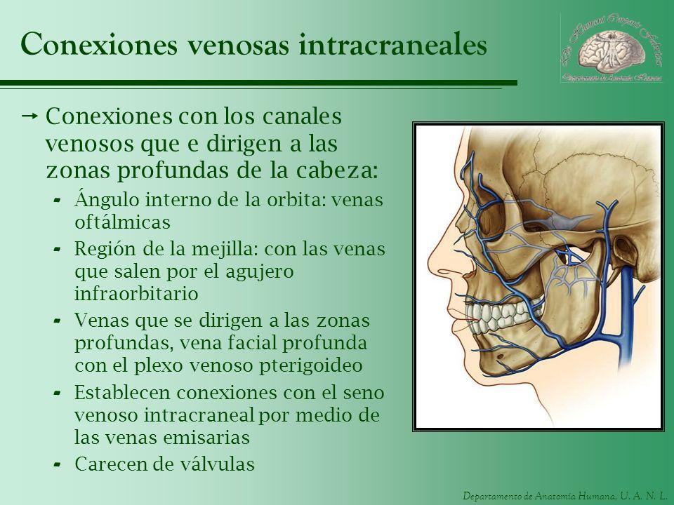 Conexiones venosas intracraneales