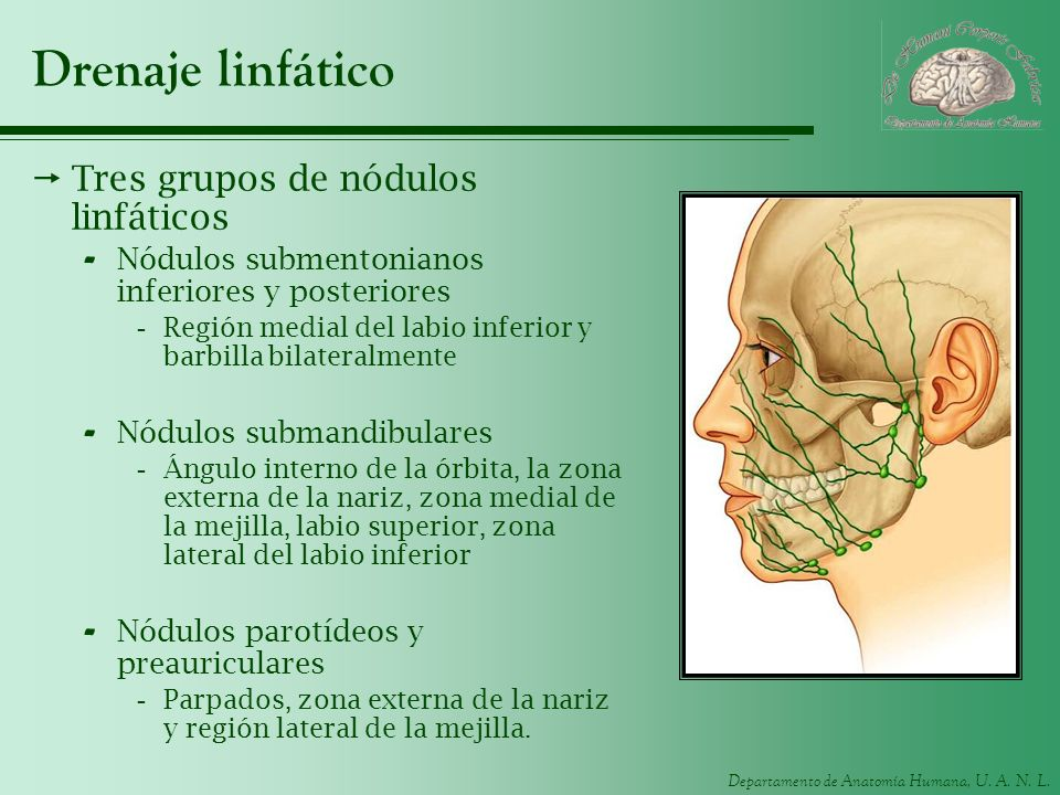 Drenaje linfático Tres grupos de nódulos linfáticos