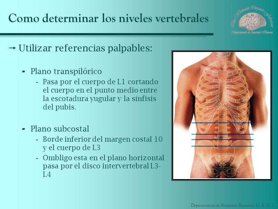 Como determinar los niveles vertebrales
