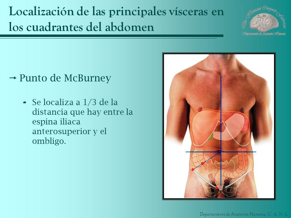 Localización de las principales vísceras en los cuadrantes del abdomen