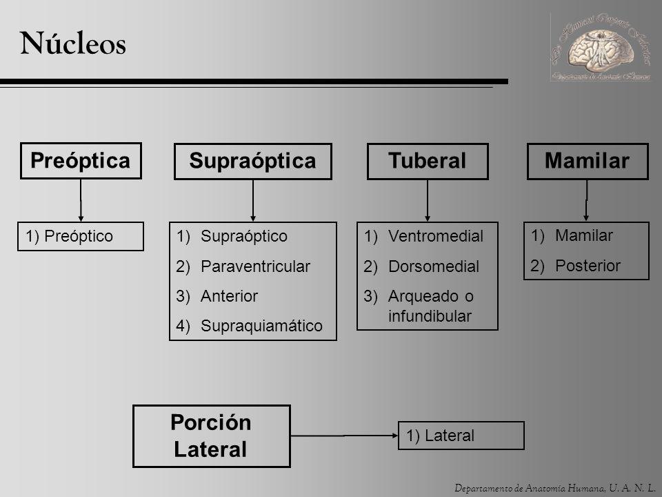 Núcleos Preóptica Supraóptica Tuberal Mamilar Porción Lateral