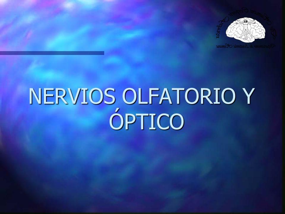 NERVIOS OLFATORIO Y ÓPTICO