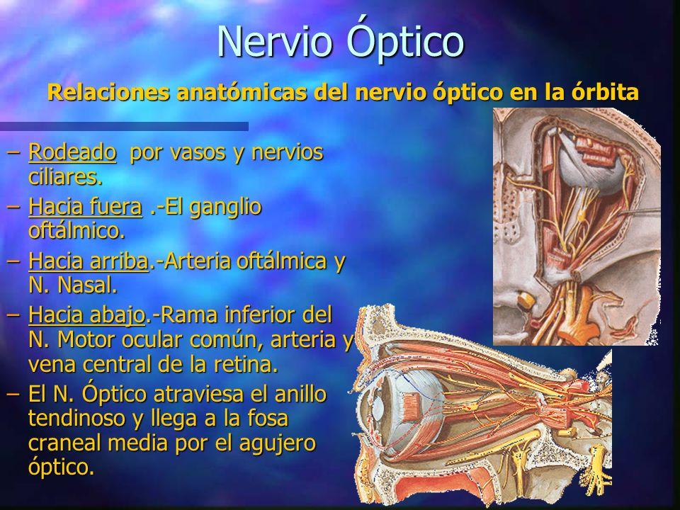 Encantador Anatomía De La Arteria Central De La Retina Modelo ...