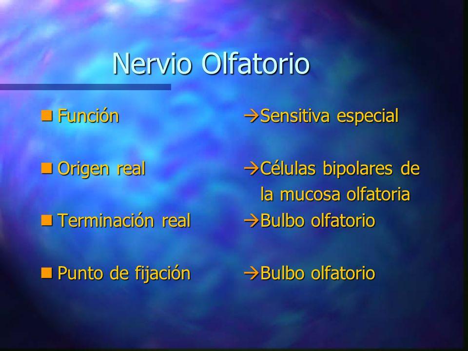 Nervio Olfatorio Función Origen real Terminación real
