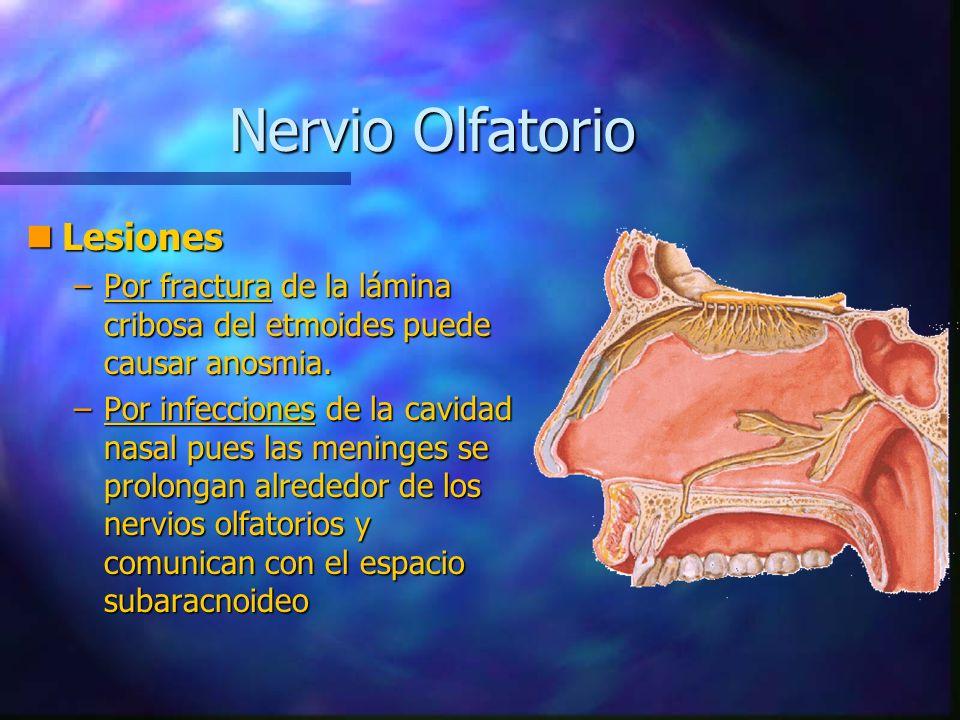 Nervio Olfatorio Lesiones