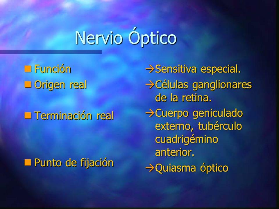 Nervio Óptico Función Origen real Terminación real Punto de fijación