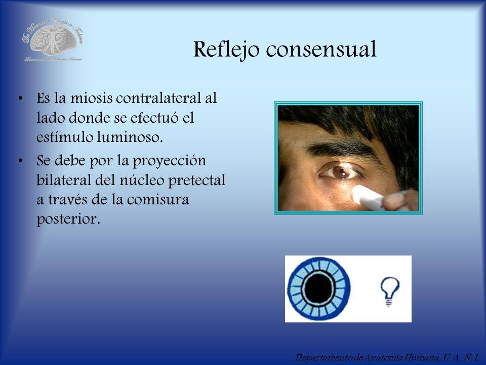 Reflejo consensualEs la miosis contralateral al lado donde se efectuó el estímulo luminoso.