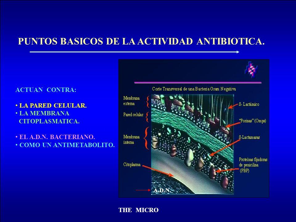 PUNTOS BASICOS DE LA ACTIVIDAD ANTIBIOTICA.