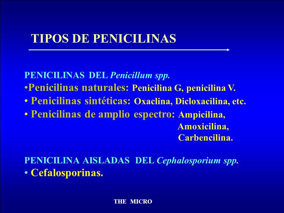 TIPOS DE PENICILINAS PENICILINAS DEL Penicillum spp. Penicilinas naturales: Penicilina G, penicilina V.