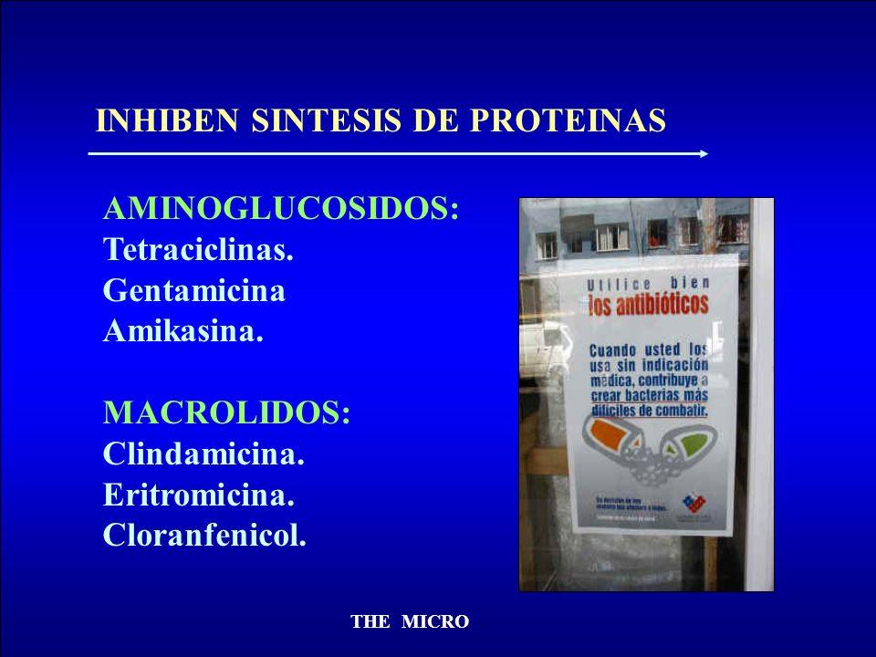 INHIBEN SINTESIS DE PROTEINAS