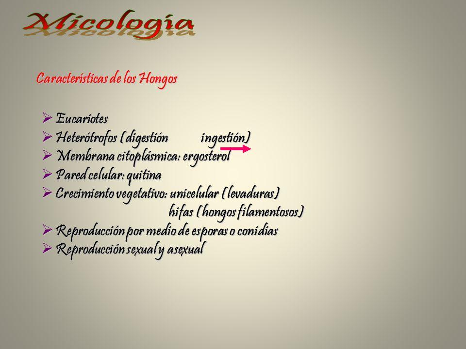 Micología Características de los Hongos Eucariotes