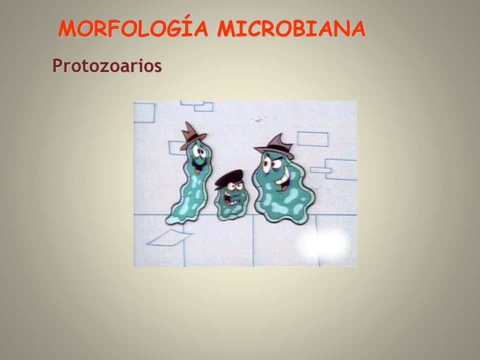 MORFOLOGÍA MICROBIANA