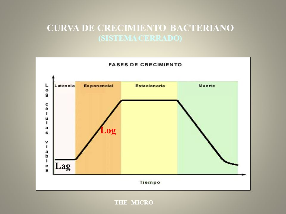 CURVA DE CRECIMIENTO BACTERIANO