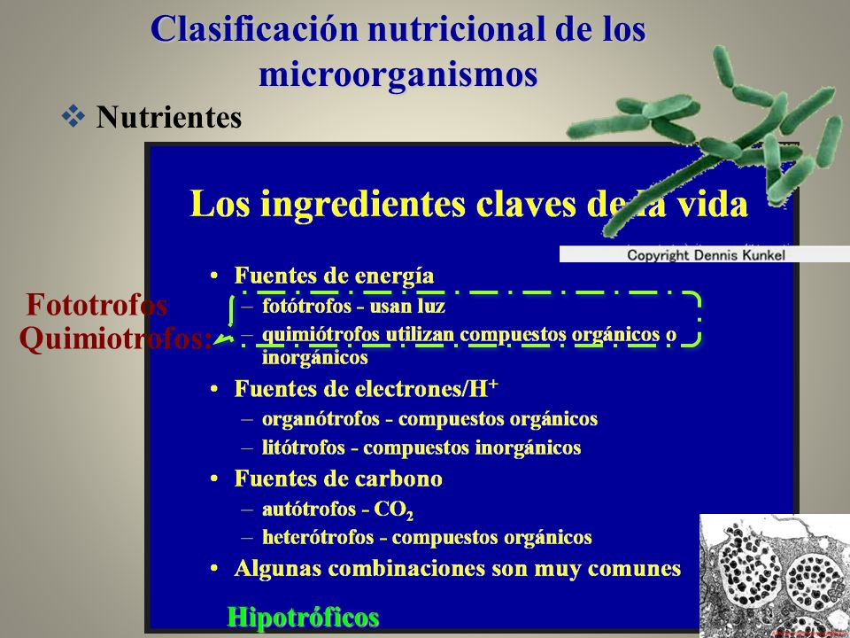 Clasificación nutricional de los microorganismos