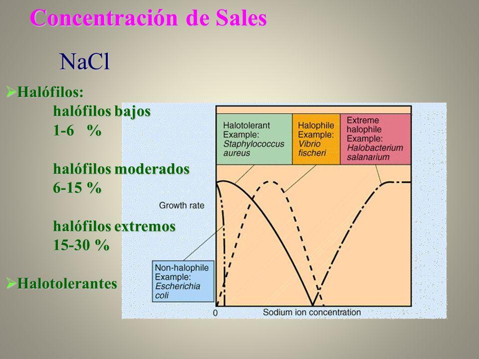 Concentración de Sales