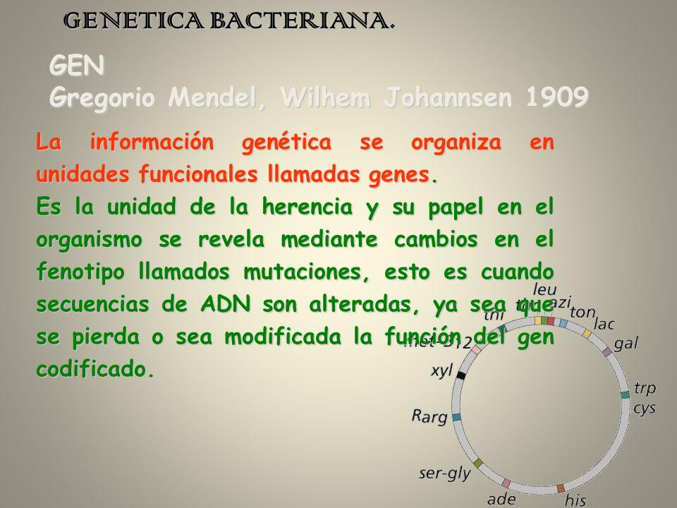 GENETICA BACTERIANA. GEN Gregorio Mendel, Wilhem Johannsen 1909