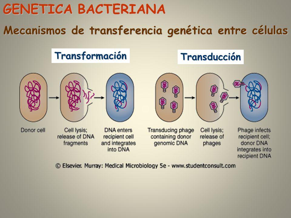 Mecanismos de transferencia genética entre células