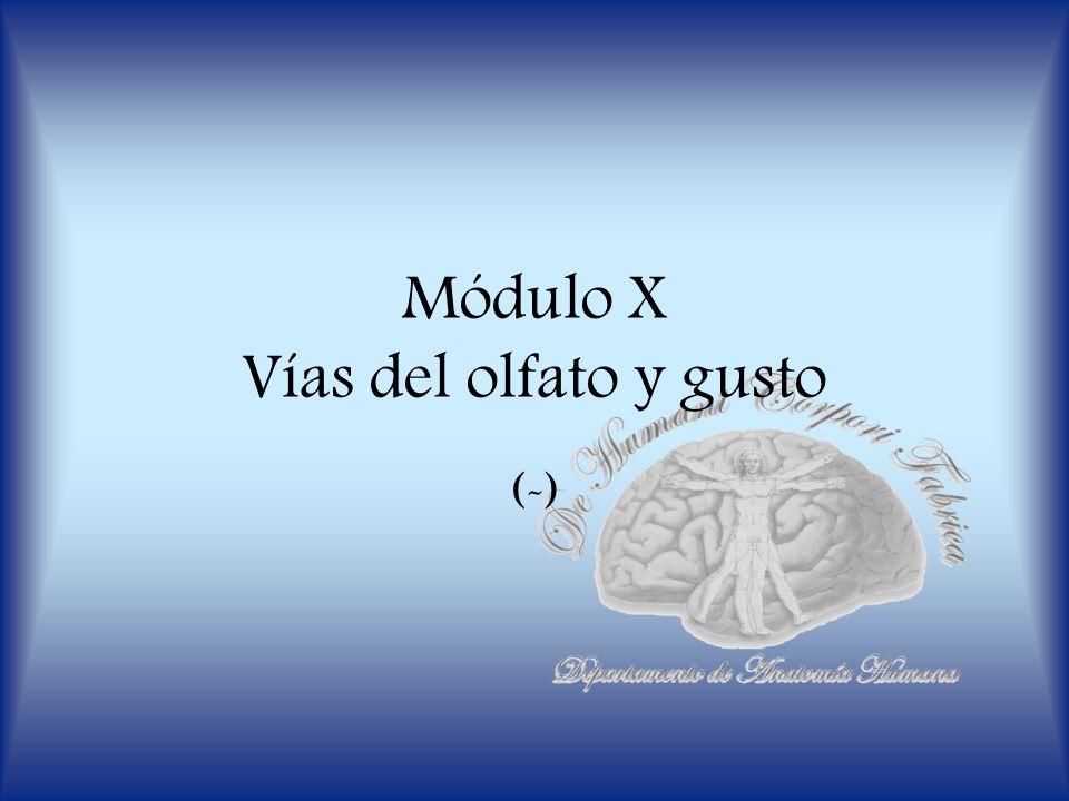 Módulo X Vías del olfato y gusto