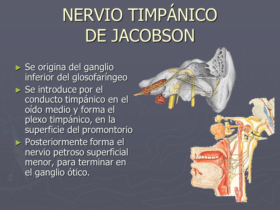 NERVIO TIMPÁNICO DE JACOBSON