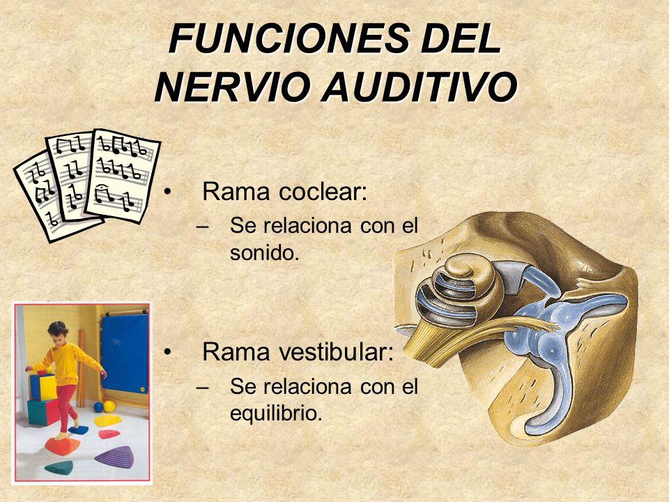 FUNCIONES DEL NERVIO AUDITIVO