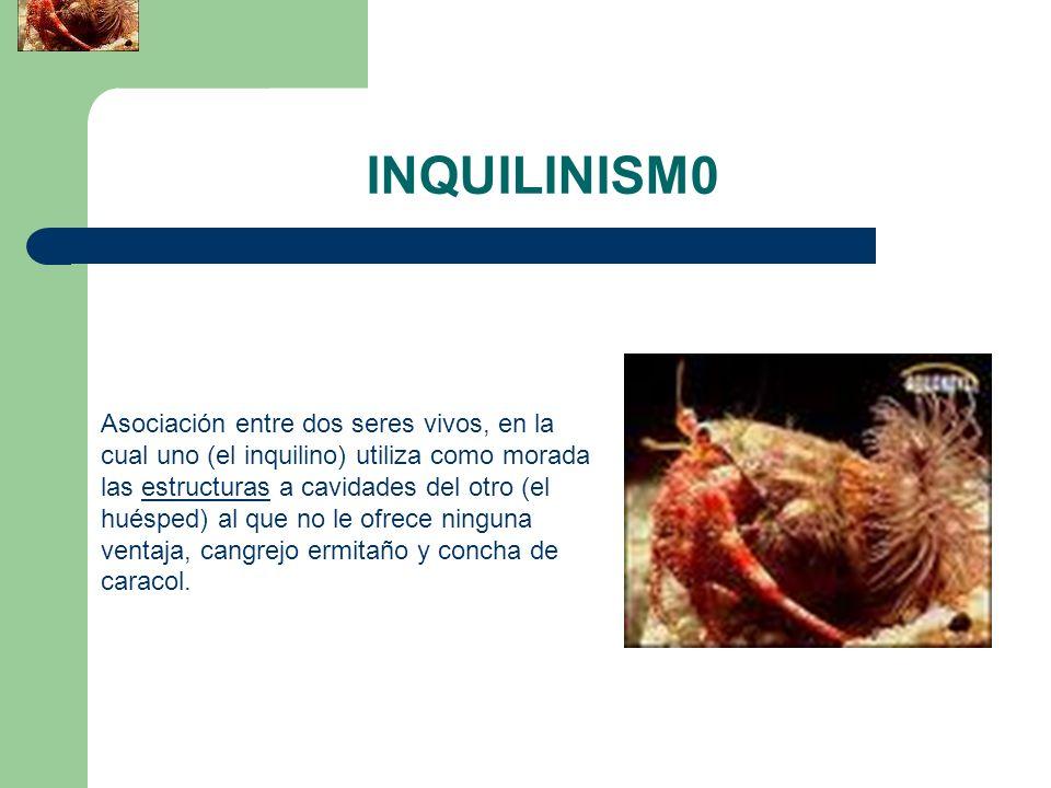 INQUILINISM0
