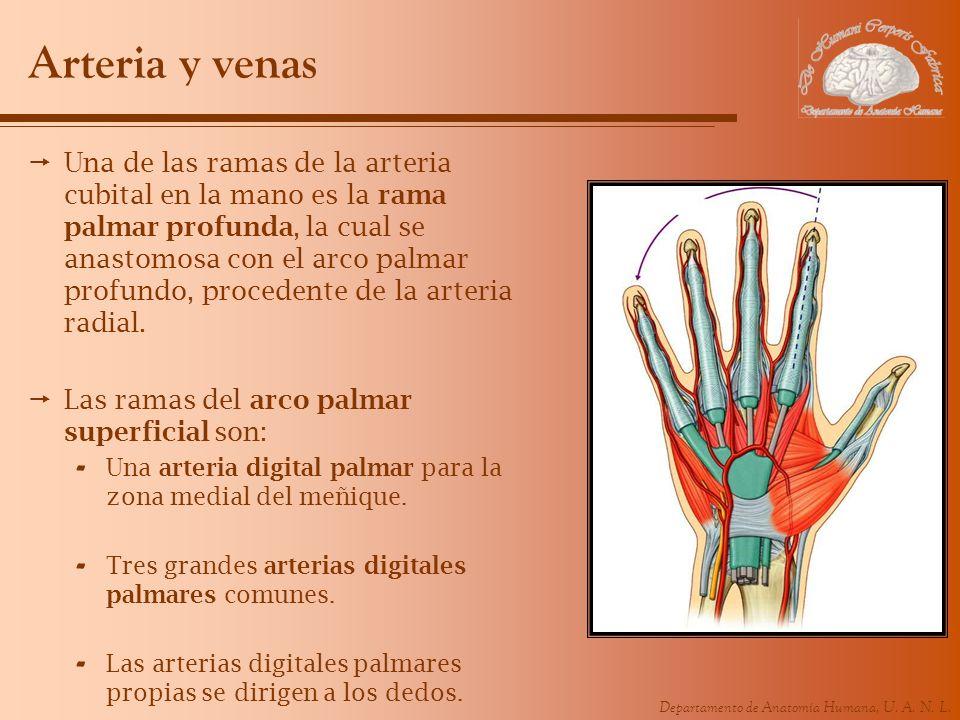 Arteria y venas