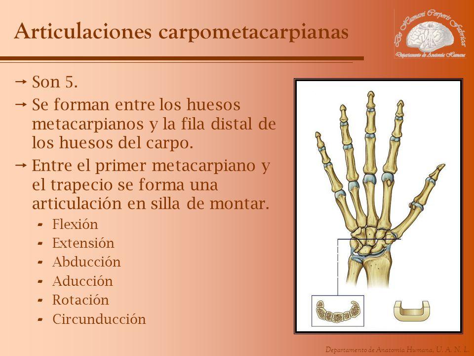 Articulaciones carpometacarpianas