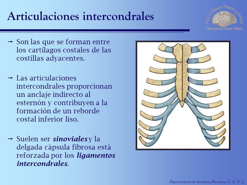 Articulaciones intercondrales