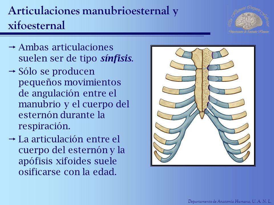 Articulaciones manubrioesternal y xifoesternal