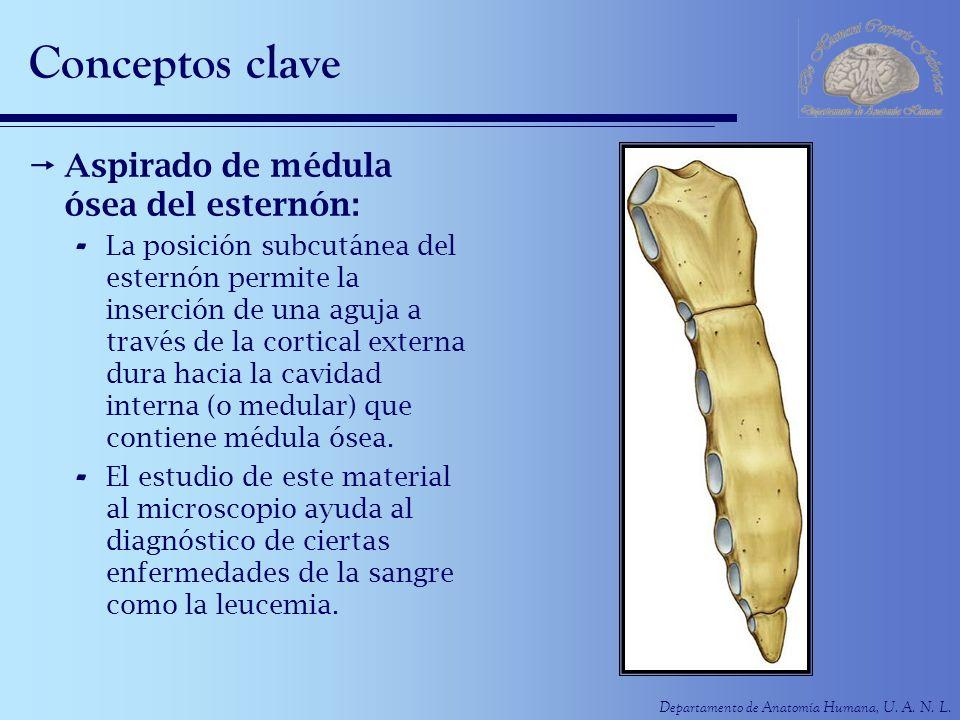 Conceptos clave Aspirado de médula ósea del esternón: