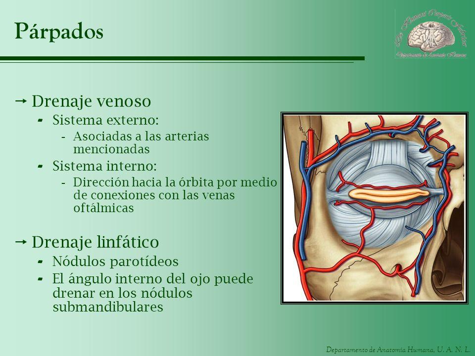Párpados Drenaje venoso Drenaje linfático Sistema externo:
