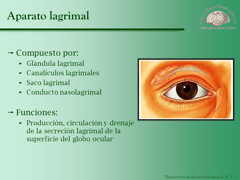 Aparato lagrimal Compuesto por: Funciones: Glándula lagrimal