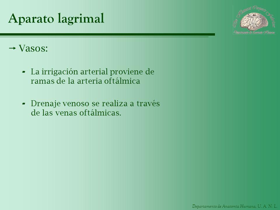 Aparato lagrimal Vasos: