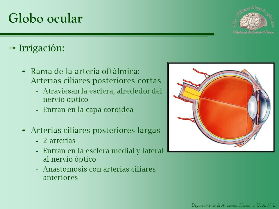 Globo ocular Irrigación: