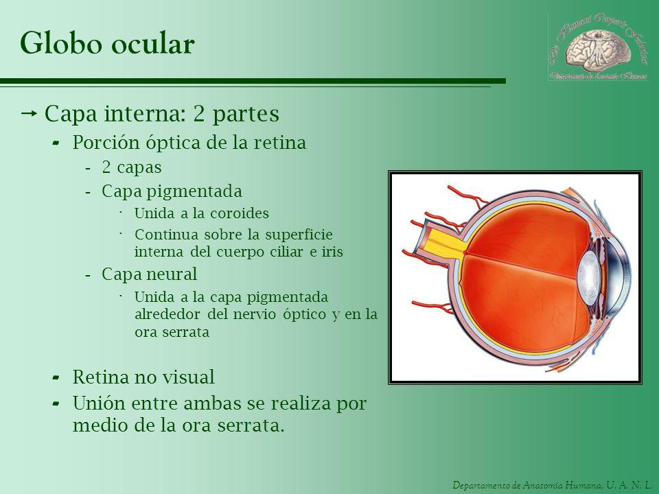 Globo ocular Capa interna: 2 partes Porción óptica de la retina