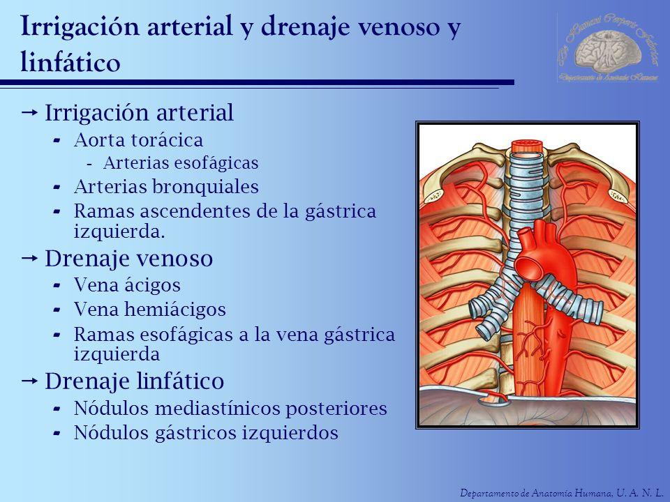 Irrigación arterial y drenaje venoso y linfático