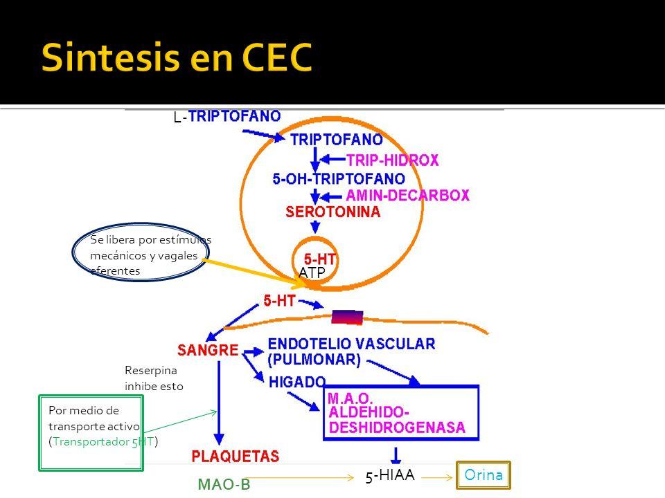 Sintesis en CEC L- ATP 5-HIAA Orina MAO-B
