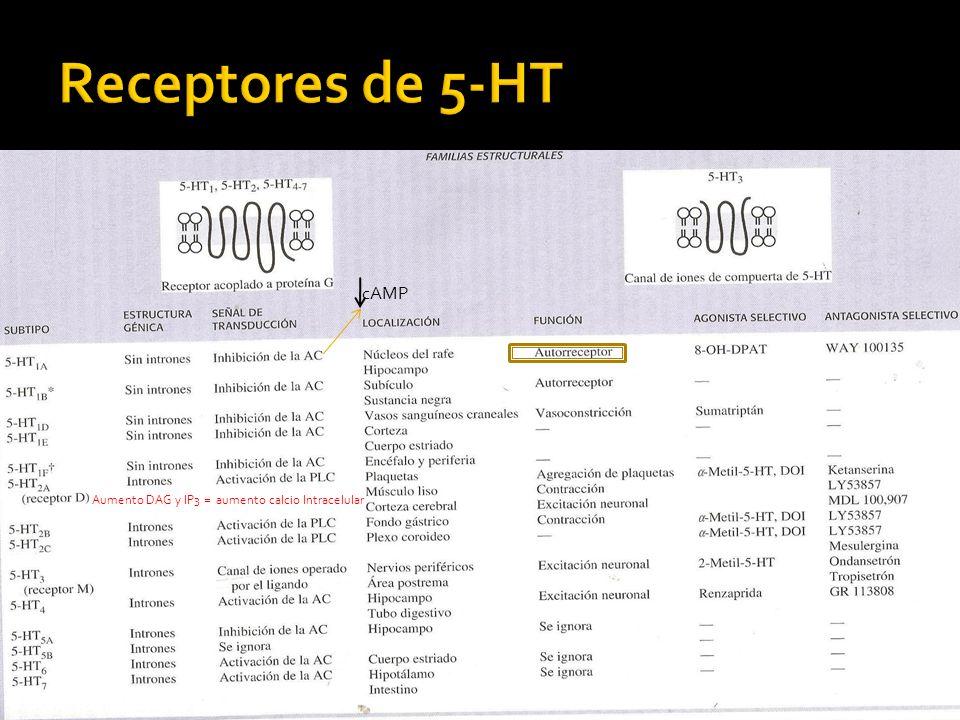 Receptores de 5-HT cAMP Aumento DAG y IP3 = aumento calcio Intracelular