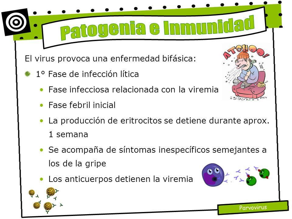Patogenia e Inmunidad El virus provoca una enfermedad bifásica: