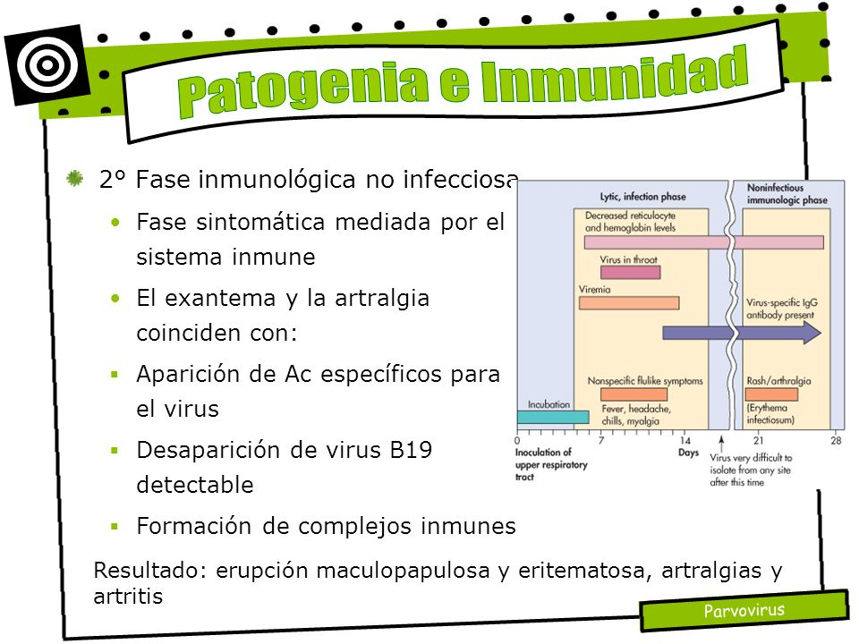 Patogenia e Inmunidad 2° Fase inmunológica no infecciosa