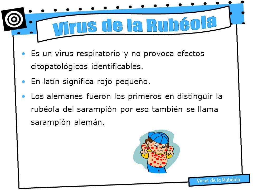 Virus de la Rubéola Es un virus respiratorio y no provoca efectos citopatológicos identificables. En latín significa rojo pequeño.