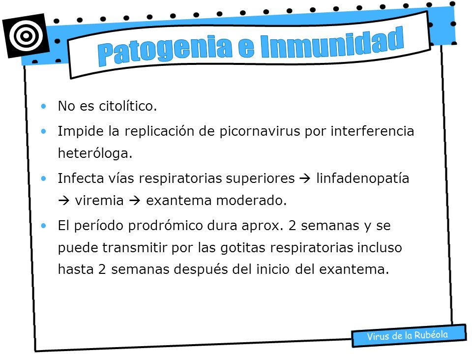 Patogenia e Inmunidad No es citolítico.