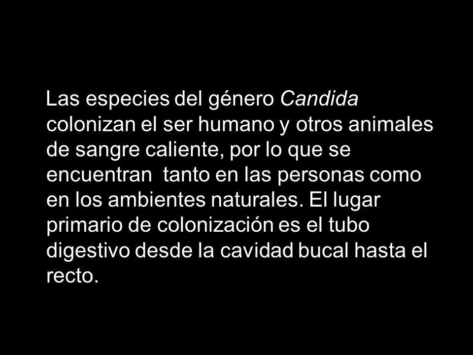Las especies del género Candida colonizan el ser humano y otros animales de sangre caliente, por lo que se encuentran tanto en las personas como en los ambientes naturales.