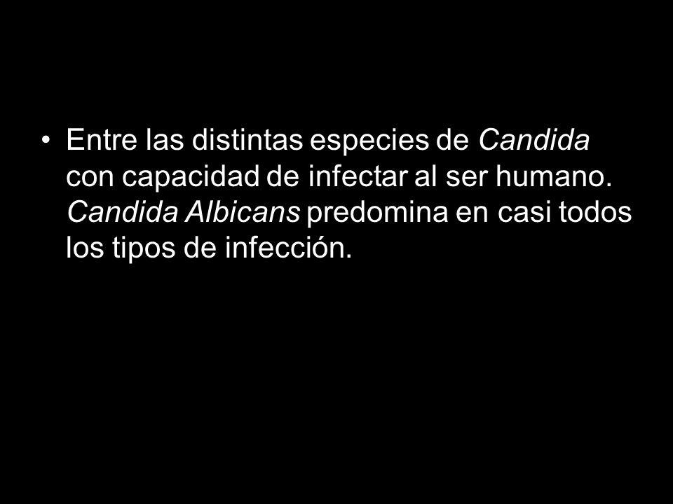 Entre las distintas especies de Candida con capacidad de infectar al ser humano.
