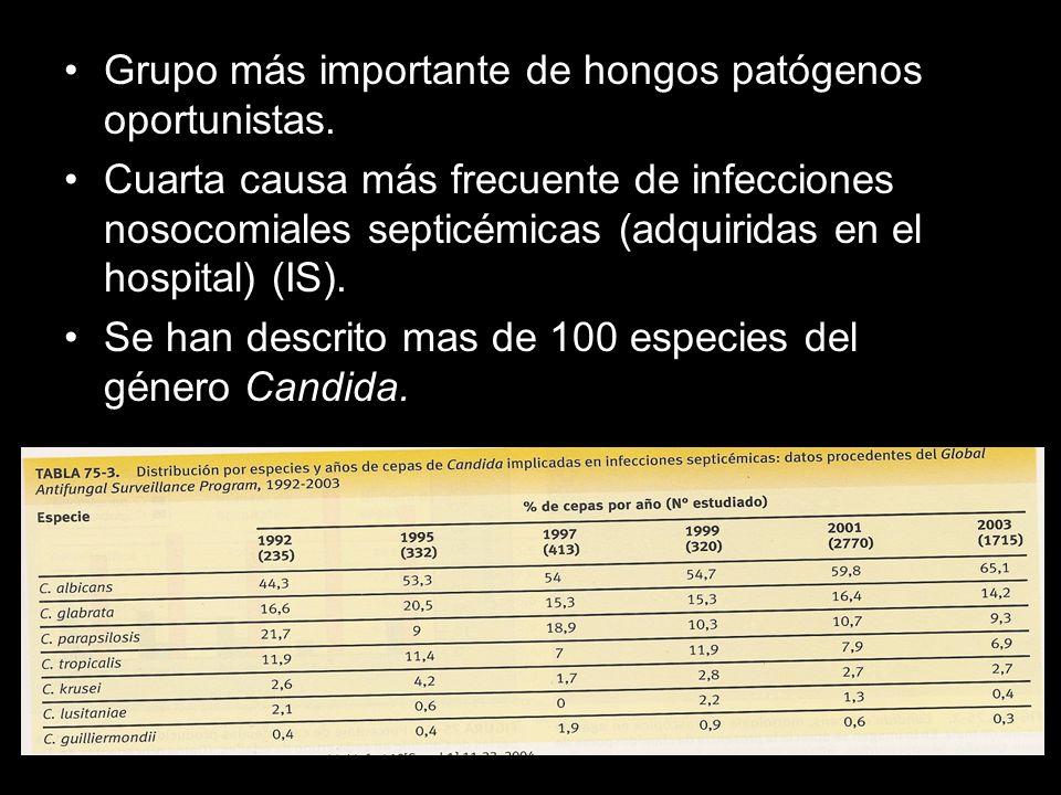 Grupo más importante de hongos patógenos oportunistas.