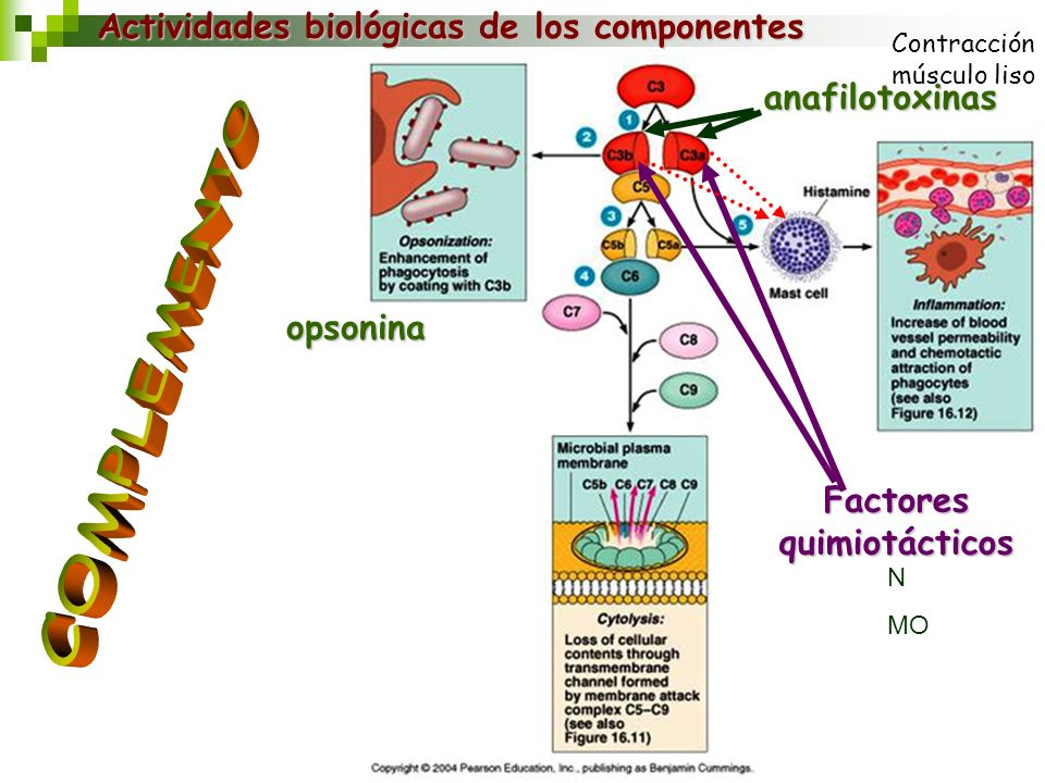 Factores quimiotácticos