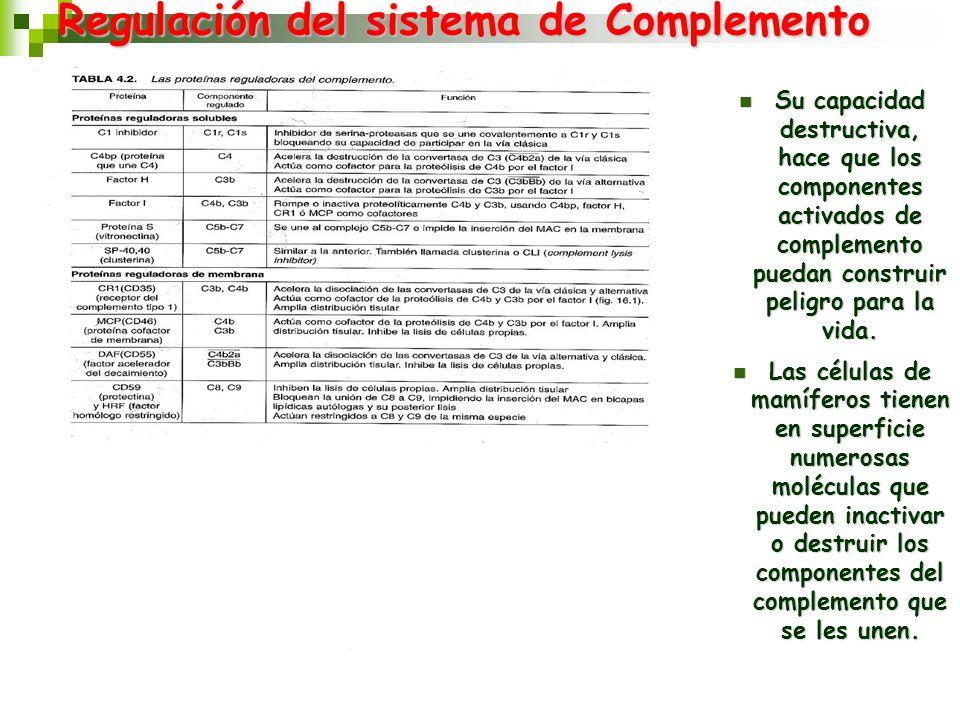 Regulación del sistema de Complemento